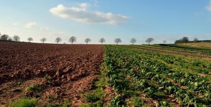 חקלאות ופיננסיים