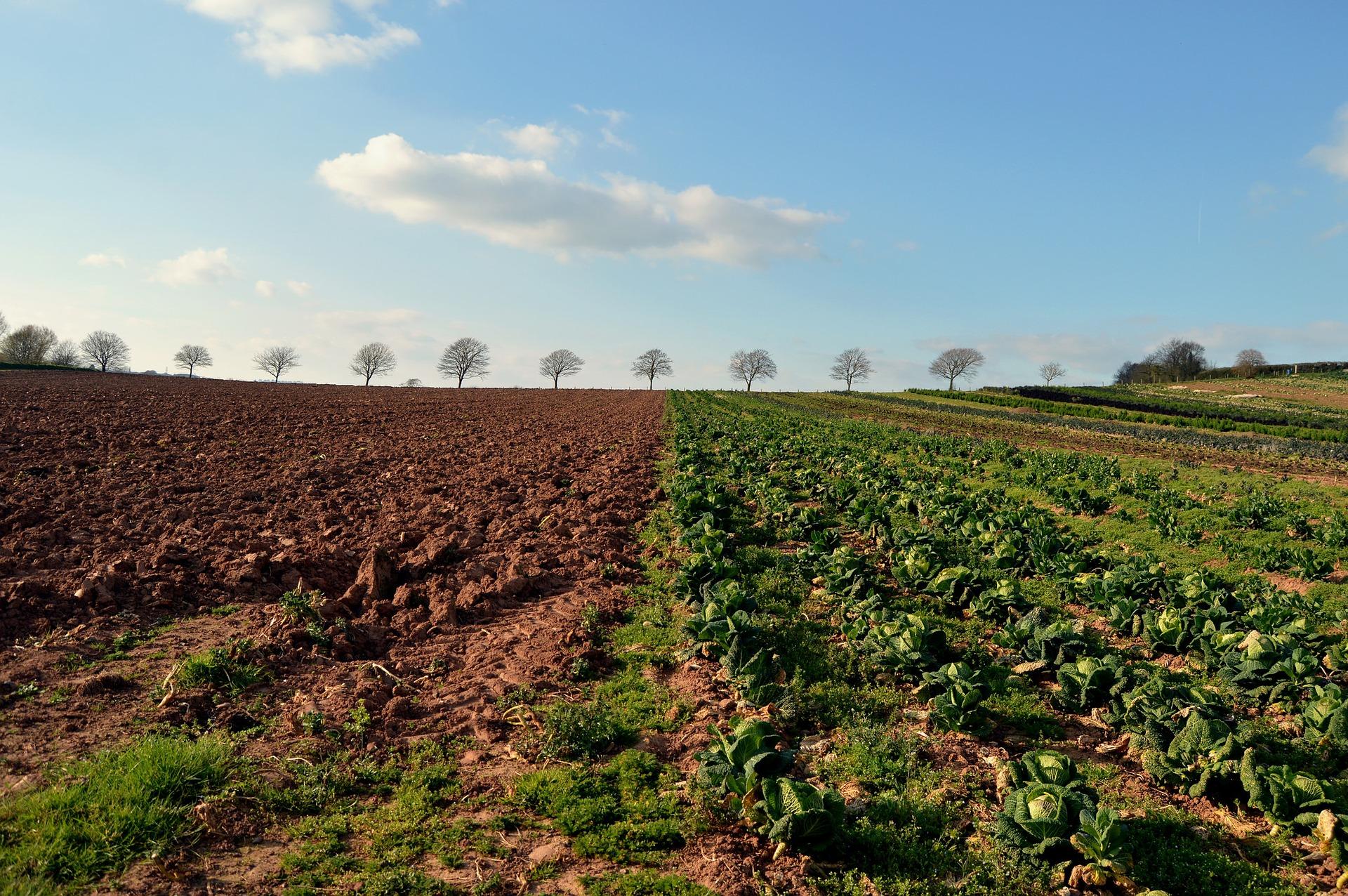 היכן נפגשים חקלאות ופיננסים ?